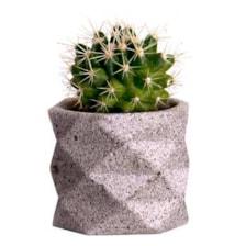 گیاه طبیعی کاکتوس لئون کد C101