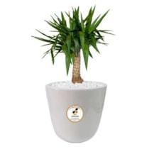 گیاه طبیعی یوکا گلباران سبز گیلان مدل GN12-16S