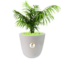 گیاه طبیعی شامادورا گلباران سبز گیلان مدل GN13-22M